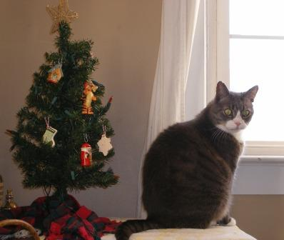 LB Guards the Christmas Tree