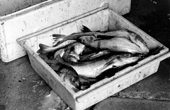 Fischkiste (doerrebachtaler) Tags: bw scotland blackwhite 1971 aberdeen scotia minoltasrt101