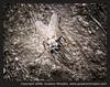 La Mosca / The Fly (gustavo@morejon.ec) Tags: insect fly ecuador mosca cuenca insecto