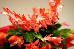 Garten Magazin (12/29) (gartenpark) Tags: dornbirn feldkirch pflanzen blumen bregenz garten rankweil bludenz aut vorarlberg grtner geringer gartenpark