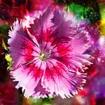Dreamy flower thumbnail