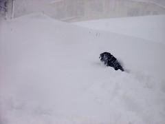 一本杉スキー場の端っこにて。Amieがボール取りに行ったらこんな感じ。