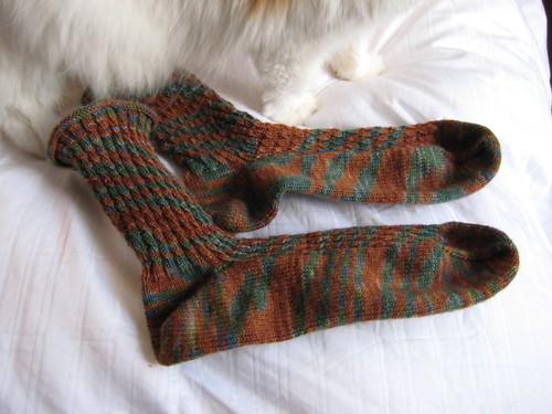RR socks cat 022608