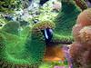 elvis is a fish (nicouze) Tags: fish nature animal fun aquarium crazy funny lyon elvis humour poisson drole absurde gardela virela2 gardela2 virela3 gardela3 virela4 virela5 virela6 virela7 virela8 virela9 virela10 virela1