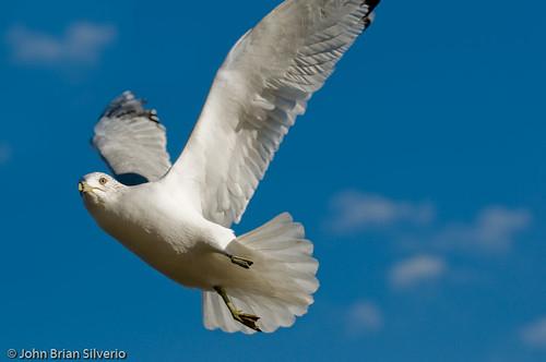 Beauty in Flight by Island Capture (aka Silverph or psilver), on Flickr