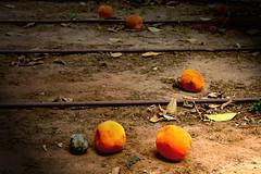 oranges (ibadishi) Tags: winter orange fruits fruit israel perfume vivid fresh jaffa oranges odor odour rehovot