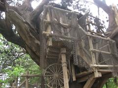 トムソーヤのツリーハウス