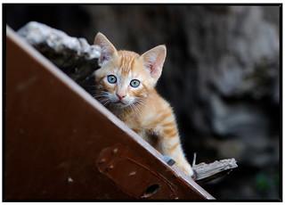 Los gatos de mi Callejón ...