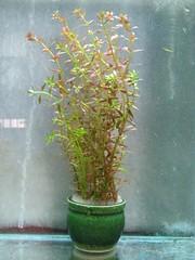 Thủy Sinh Tuấn Anh-Chuyên cây & Rêu Thủy Sinh, Cá Cảnh Biền & Hồ Cá Cảnh Biển - 19