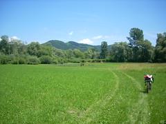 Fahrrad im Feld