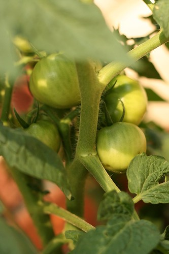 garden july 2008
