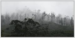 Ooty | Mist 2