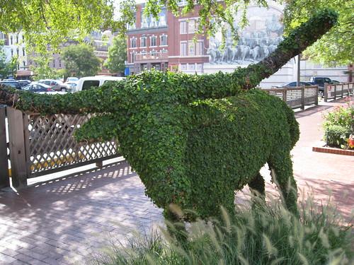 Topiary Longhorn
