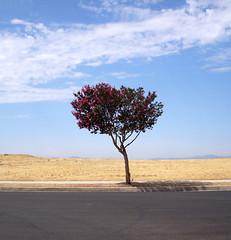 I Dare You (redrocker_9) Tags: pink shadow sky tree takingpictureswhiledriving ilovethistree i733