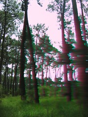 a forest (psychedelic)