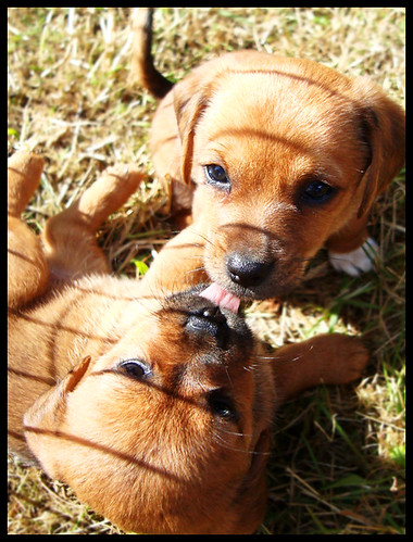 very cute puppies pictures. Cute Puppies 1