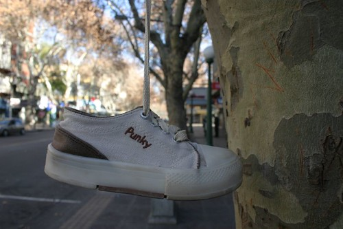 Punky in the tree. Mendoza, Argentina.