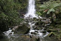 Oz3 267 Erskine Falls (Gillian in Brussels) Tags: nature coast waterfall nationalpark australia shore greatoceanroad erskinefalls greatotwaynationalpark