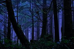 Rainforest Night Magic (Fort Photo) Tags: park blue vacation mist nature fog night forest landscape outdoors evening washington nationalpark twilight nikon rainforest nightscape pacific northwest nps surreal olympicpeninsula pacificnorthwest wa sitka olympicnationalpark pnw spruce d300 catchycolorsblue outstandingshots specland mywinners oraclex 2008reunionnature