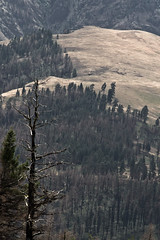 Hells Canyon (#51 of 80) (absencesix) Tags: travel trees plants usa nature oregon iso100 nationalpark unitedstates perspective july canyon noflash northamerica 2008 scrub pinetrees locations contours 70200mm locale hellscanyon canoneos30d 168mm camera:make=canon exif:make=canon exif:iso_speed=100 geo:state=oregon hatpoint apertureprioritymode july292008 hasmetastyletag naturallocale summer2008travel lookingdownhighvantagepoint haslenstype sigmaexdgmacro7020028 hellscanyon0727292008 hellscanyonnationalpark selfrating3stars 1160secatf11 exif:focal_length=168mm geo:countrys=usa exif:model=canoneos30d camera:model=canoneos30d exif:lens=7002000mm exif:aperture=11 subjectdistanceunknown geo:city=hellscanyon hellscanyonoregonusa