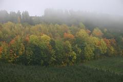 Hsttke (fotomormor) Tags: autumn fall fog hst tke trr farger challengeyouwinner photofaceoffwinner pfosilver herowinner