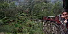 . (PijO.) Tags: bridge forest train railway australia victoria steam dandenong ranges delight billy dandenongs puffing