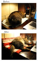 Improvementz. I haz them. ([andreea]) Tags: brown cat table lumix chat desk laptop tabby panasonic behavior 猫 ねこ rescued improvements ネコ cattitude pitsi lolcat icanhascheezburger dmcfz8 lolspeak