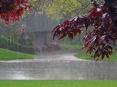 18 (Mrym.fm) Tags: باران دلتنگی