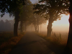 foggy morning (Per Ola Wiberg ~ Powi) Tags: oktober mist nature sweden explore harmony sverige soe breathtaking 2007 musictomyeyes dimma naturegroup awesomeshot blueribbonwinner finegold simplybeautiful autumnfall justonelook iful thegalaxy eker passionphotography fineartphotos ekebyhov beautifulcapture mywinners abigfave royalgroup peaceaward onlyyourbestshots ekebyhovsalln citrit flickrsilveraward heartawards eliteimages goldsealofquality everydayissunday theperfectphotographer goldstaraward highqualityimage ilovemypics explorewinnersoftheworld onewordwow rubyphotographer qualitypixels beautifulshot fabulousflicks theloveshack abovealltherest photographersgonewild thelightpainterssociety empyreanart panoramafotogrfico lostrotamundo photographerparadise wonderfulpicturesfortheworld  saariysqualitypicturesgallery thirdlifegroup fotografiayotros exquistecapture platinumpeaceaward flickrsgottalent bestpeopleschoice mygearandme buildyourrainbowtransparent thenaturessoul chariotsofartists level1photographyforrecreation chariotsofartistslevel2