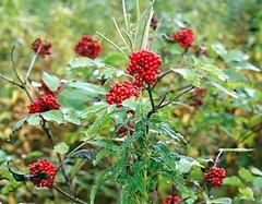 scottish highland (gmj49) Tags: trees scotland sony scottish m highland naturesfinest gmj a350 shareyourtalent bestofbritishnature photosrus