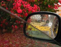 extravagance 1 (mereshadow) Tags: november fall leaves yellow heart sacred raindrops whitepicketfence 2008 burningbush gingkoleaves extravagance greenvilleillinois godismad