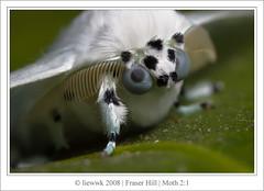 12.6 Moth - ID Need ... 2:1