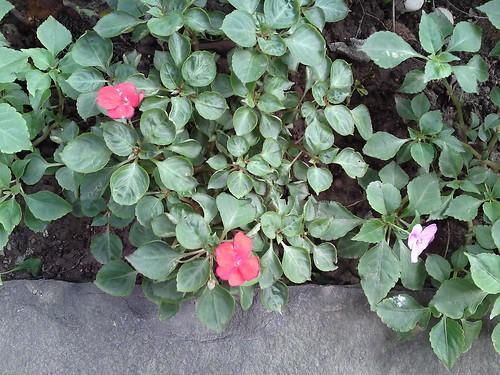 路邊的小花