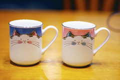 11/28/08 kitty cups