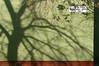 Szőlőhegy utca (sonofsteppe) Tags: street winter shadow urban detail building tree green art horizontal wall corner daylight hungary exterior outdoor bare budapest nobody scene explore pentacon visual exploration manualfocus thewall twiggy 135mm fragment bough ilmuro streetplate wallscape sonofsteppe pusztafia kőbánya utcatábla streetplatesofbudapest óhegy szőlőhegyutca urbanlifeoftrees