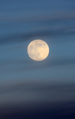 1moonrising (John Hollowell Photography) Tags: sunset moonrise ocean view night sky sunsetting montereybay pacificocean coyote deer santacruzmountains skyview california fullmoon californiaredwoodsphotography johnhollowellphotography