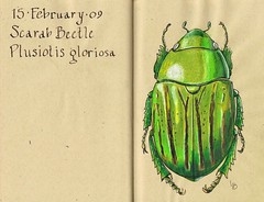 Beetle a Day