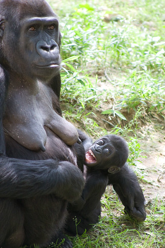 Gorilla Baby