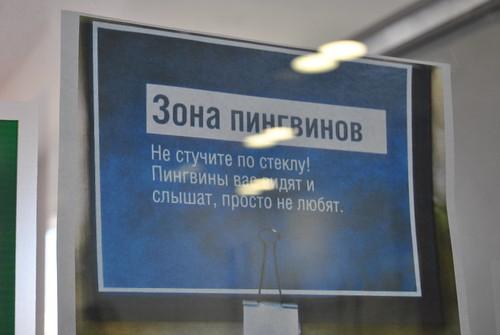 Пингвины в Яндексе