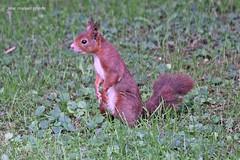 En el parque (PriedePriede) Tags: animales seres vivos