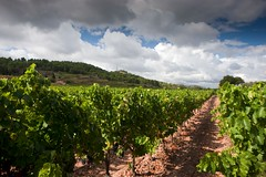ventenac cabardes (sauterwijnen1) Tags: wijn maurel cabardes