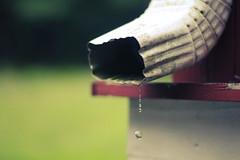 Day 151 (vansandflannel) Tags: water canon 50mm drops cool drain cj 365 18 tones gutters vansandflannel