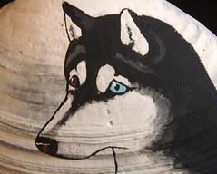 closeup of Siberian Husky