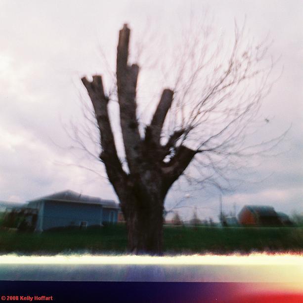 Hallam Tree