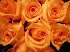 Orange Roses (2)