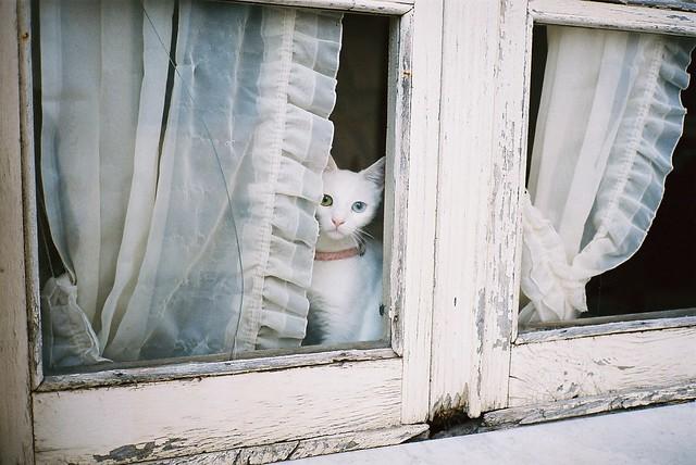 oristano, gatto