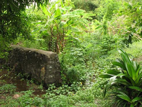 Swampy Sanctuary