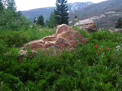 Wildflowers and Outcropping (mtncanyon) Tags: lake mountains creek colorado eagle indian peak trail crater lone wilderness peaks cascade