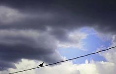 on a wire (alaskajoey) Tags: summer cloud bird rain clouds nj powerline thunder edgewater rollingin august2008