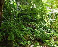 Jungle (Key West Wedding Photography) Tags: flowers flower gardens garden florida secret nancy bloom keywest cayobo blooms secrets secretgarden forrester helenbo secretgardens nancyssecretgarden namcyforresterssecretgarden nancyforrester